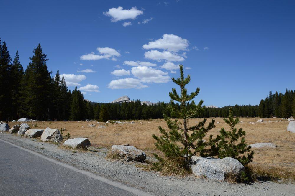 Roadtrip - Westküste Kalifornien - Yosemite Nationalpark